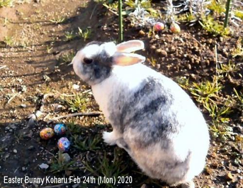 01b 600 20200224 Easter Bunny Koharu