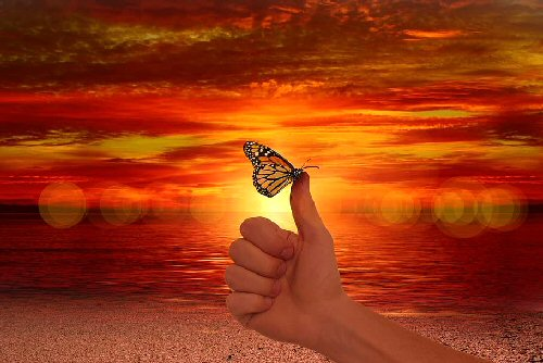 03c 500 butterfly resting on his finger