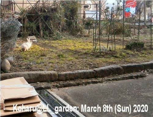 01a 600 小春_in_LL_garden_01