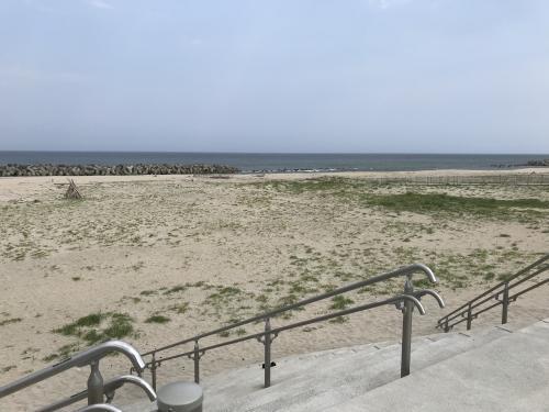 新舞子海岸のヒルガオ・2