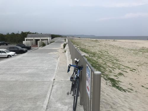 新舞子海岸のヒルガオ・4
