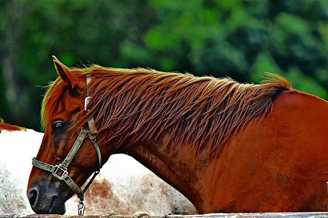 ココペリウエスタンライティングのお馬さん