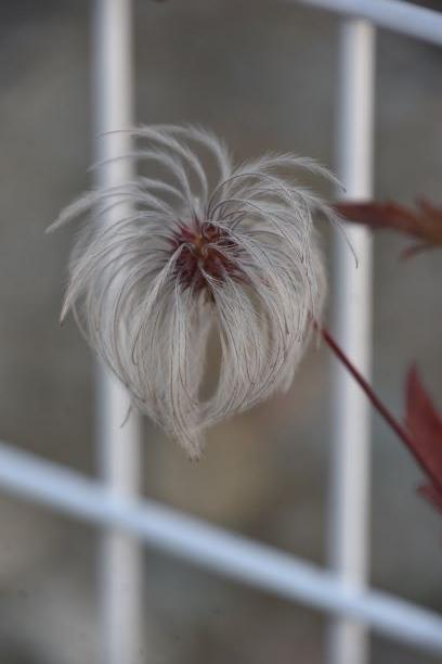 DSC_4668 植物