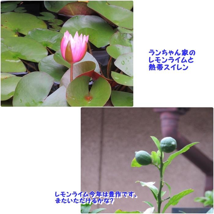 まる020705C