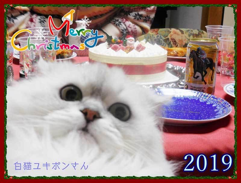 2019-12-25-Wed-01-白猫ユキポンさんとクリスマス_DSCN9054