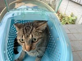 IMG_8822 さくら猫