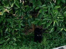 IMG_8619 地域猫クロ