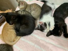 IMG_9663 保護猫