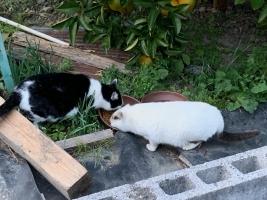 IMG_0876 母猫とシロ