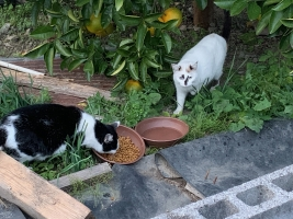 IMG_0878 母猫とシロ