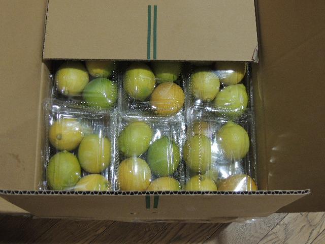 レモンDSCN0480 - コピー