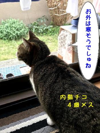 猫漫画12/5