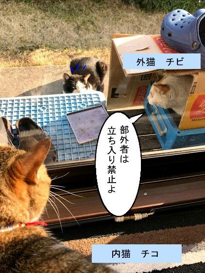 shirokuro2.jpg