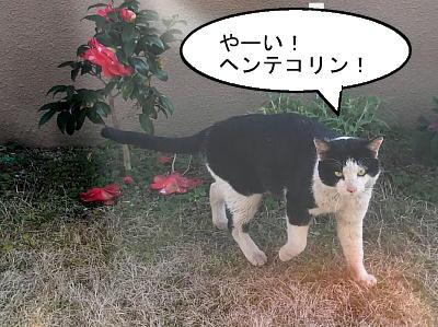 shirokuro5.jpg