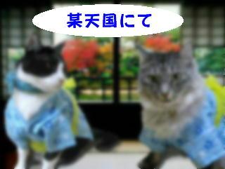 猫漫画10/23