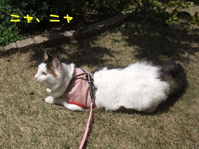 DSCF4216_R.jpg