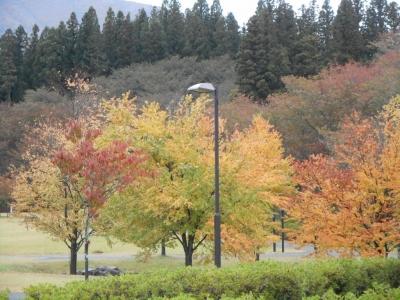 kamegajo332.jpg