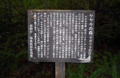keyakinomori15.jpg