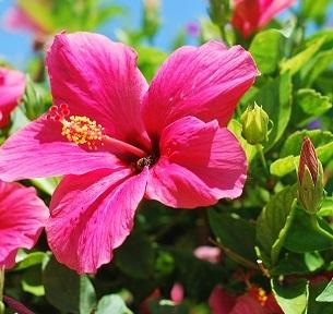 flower-2508160_1920.jpg