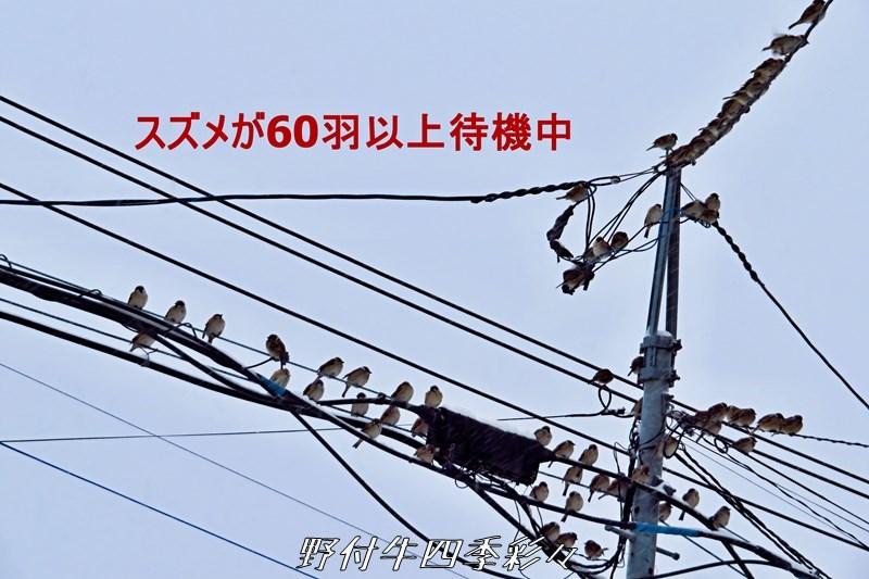 s-Ca-20200217-065548-0.jpg