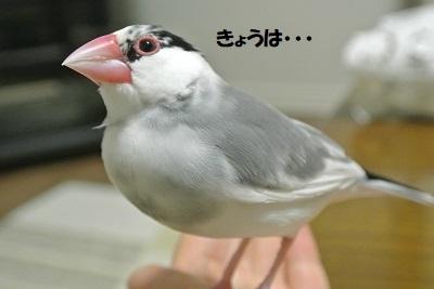 DSC_0007済