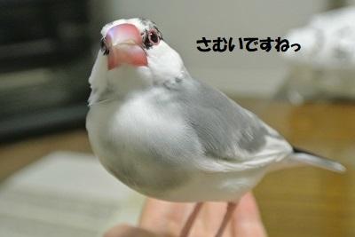 DSC_0008済