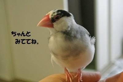DSC_0107済