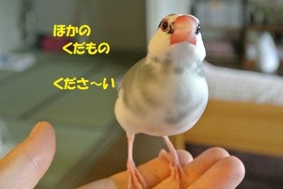DSC_9823.jpg