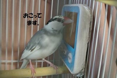 DSC_9872.jpg