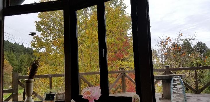 窓辺の晩秋
