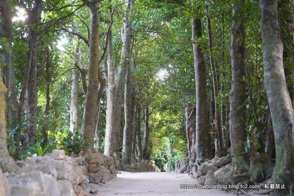 沖縄 備瀬のフクギ並木に泊まる