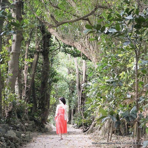 早朝の備瀬のフクギ並木を散歩