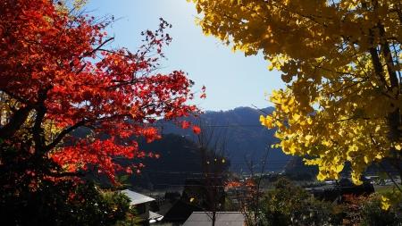 ぴーきち&ダイナ 美山 かやぶきの里ツーリング 紅葉 赤と黄色のコントラスト