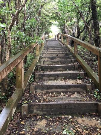 ぴーきち&ダイナ ハーレーで行く 室戸岬 ツーリング 室戸スカイライン山頂展望台 階段