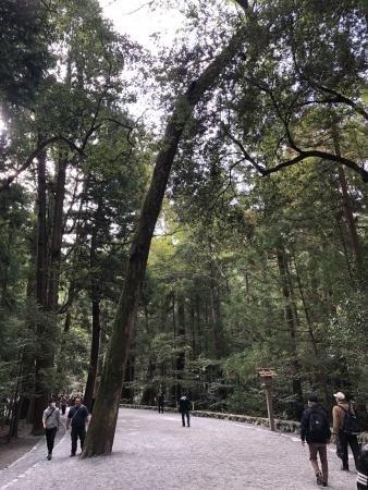 ぴーきち&ダイナ ハーレーで行く 伊勢志摩ツーリング 伊勢神宮 参道 樹齢400年~900年