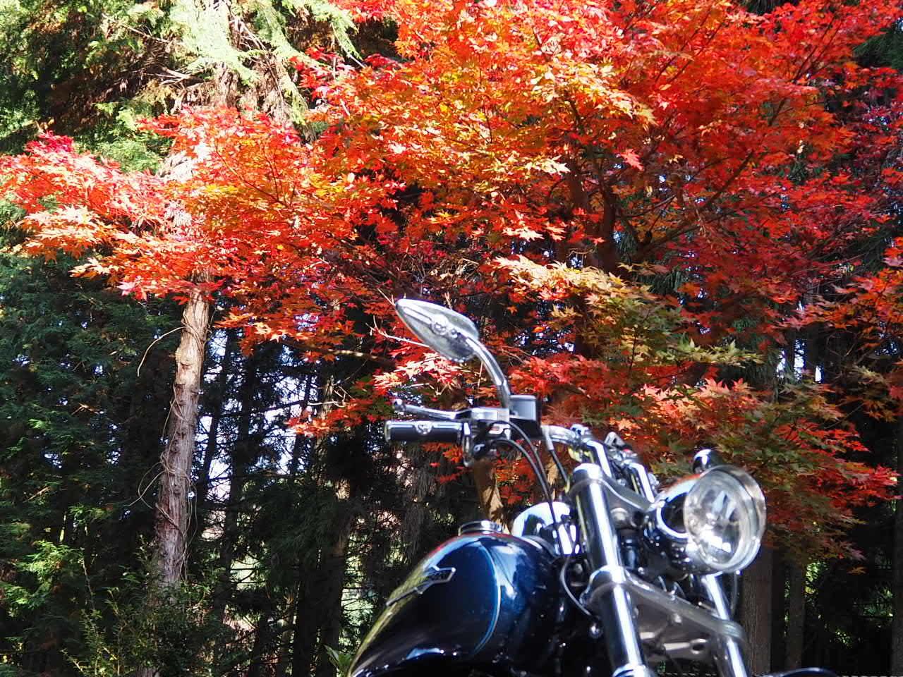 ぴーきち&ダイナ 布目ダムツーリング 布目湖の紅葉