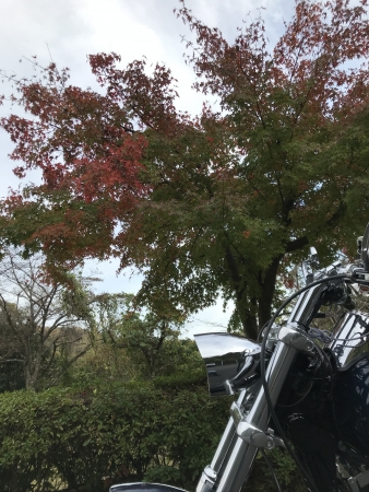 ぴーきち&ダイナ 高山ダムツーリング わずかに紅葉