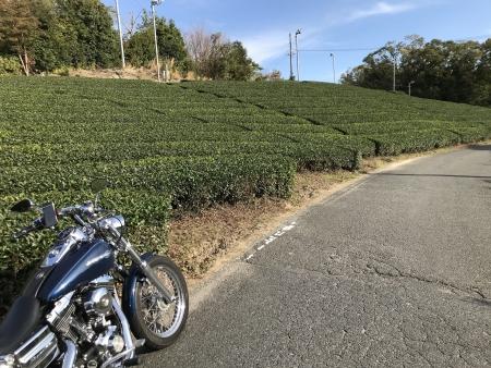 ぴーきち&ダイナ 高山ダムツーリング 南山城村お茶畑