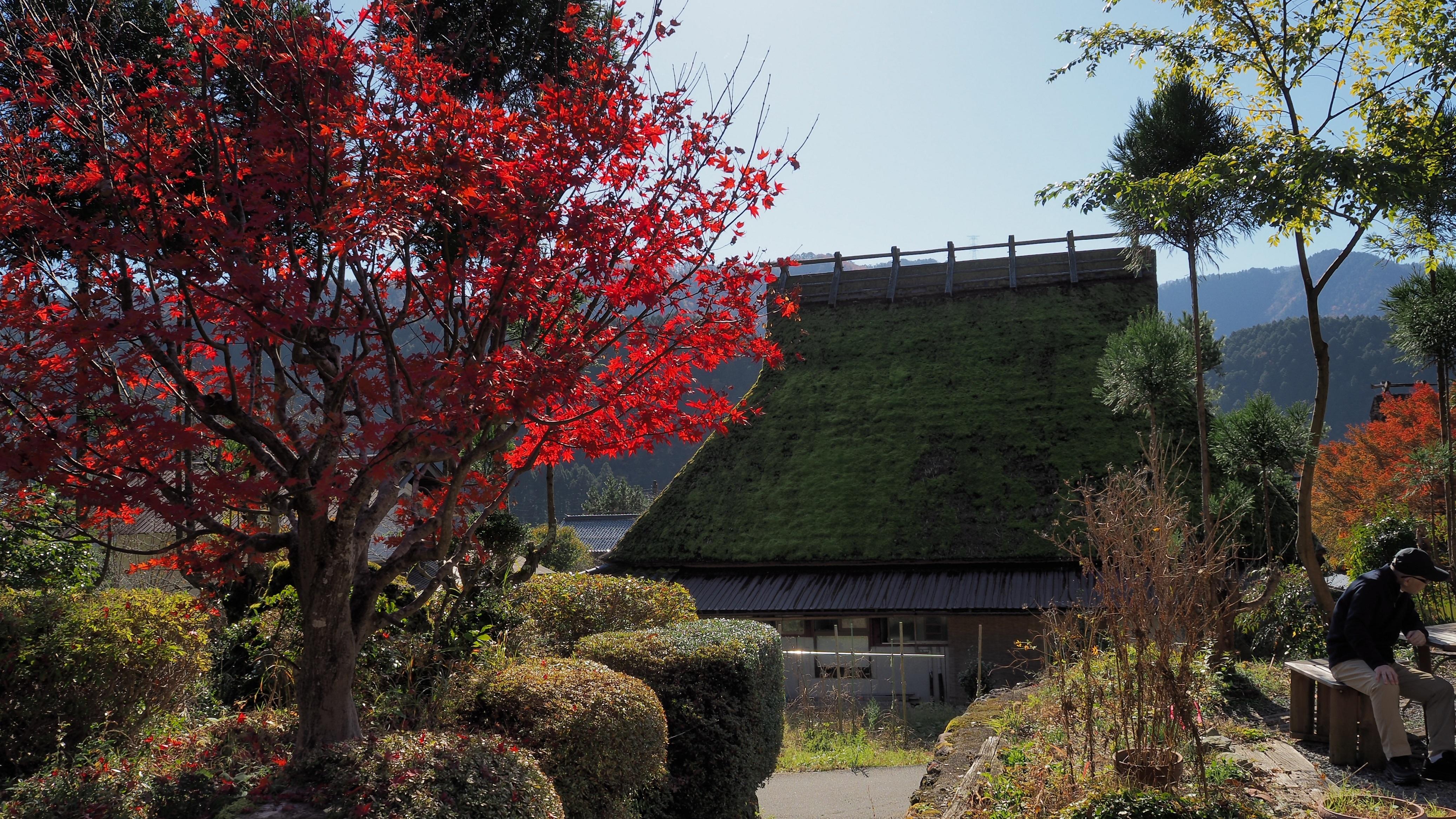 ぴーきち&ダイナ 美山 かやぶきの里ツーリング 紅葉