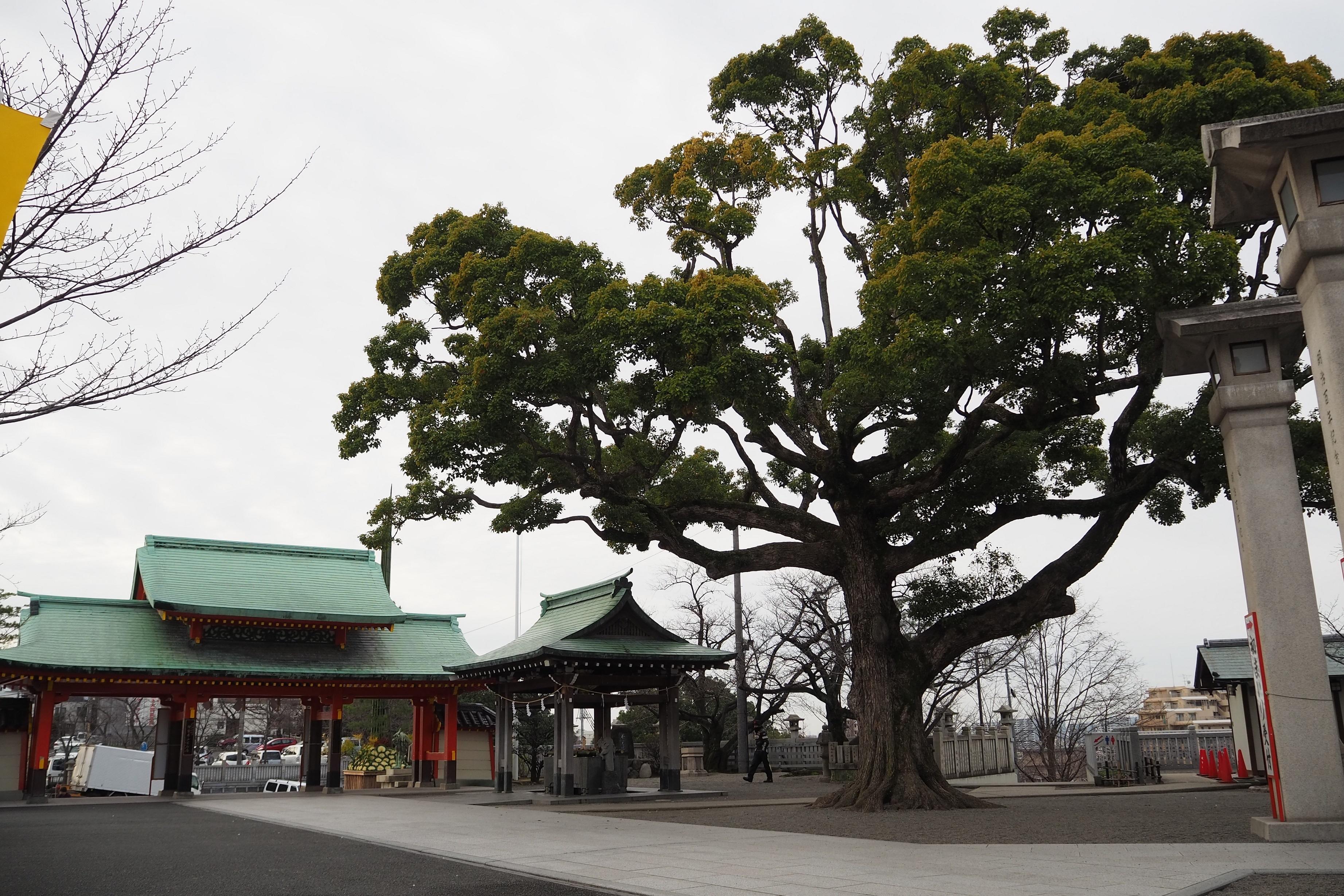 harleydavidson-motorcycle-touring-blog-naritasan-shrine-tree.jpg
