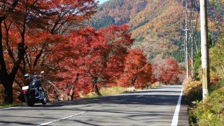 ぴーきち&ダイナ 美山 かやぶきの里ツーリング 大野ダム編 紅葉の道