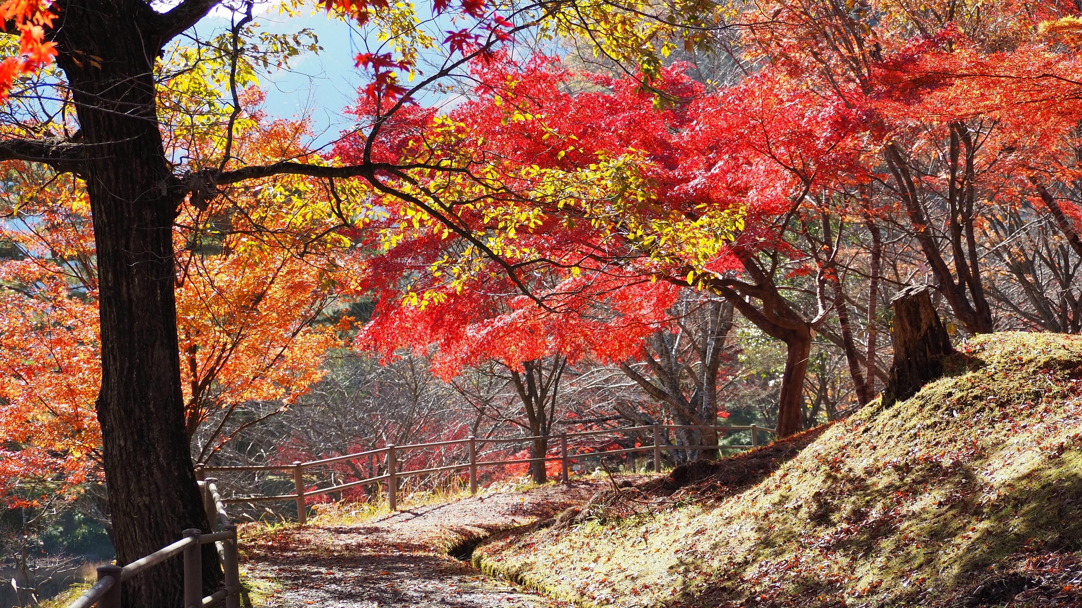 ぴーきち&ダイナ 美山 かやぶきの里ツーリング 大野ダム編 大野ダムの紅葉