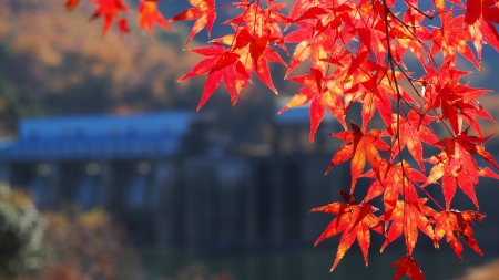 ぴーきち&ダイナ 美山 かやぶきの里ツーリング 大野ダム編 ダムと紅葉