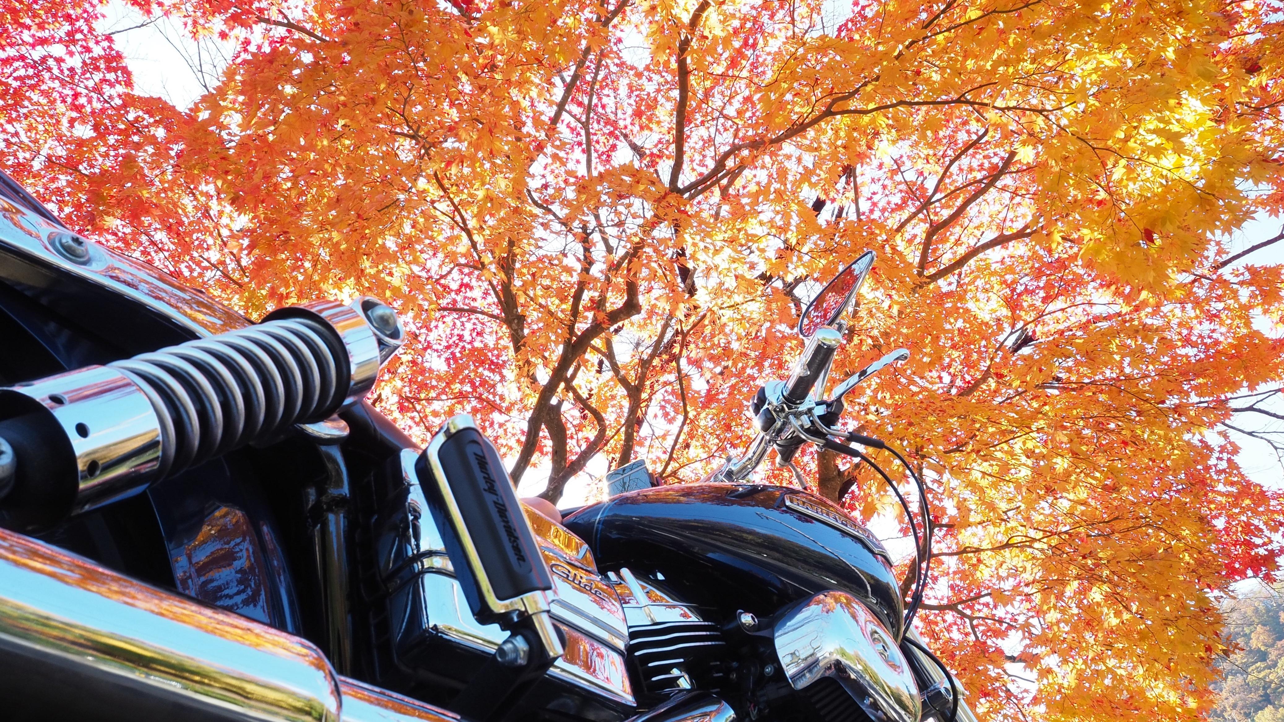 ぴーきち&ダイナ 美山 かやぶきの里ツーリング 大野ダム編 紅葉が美しい道