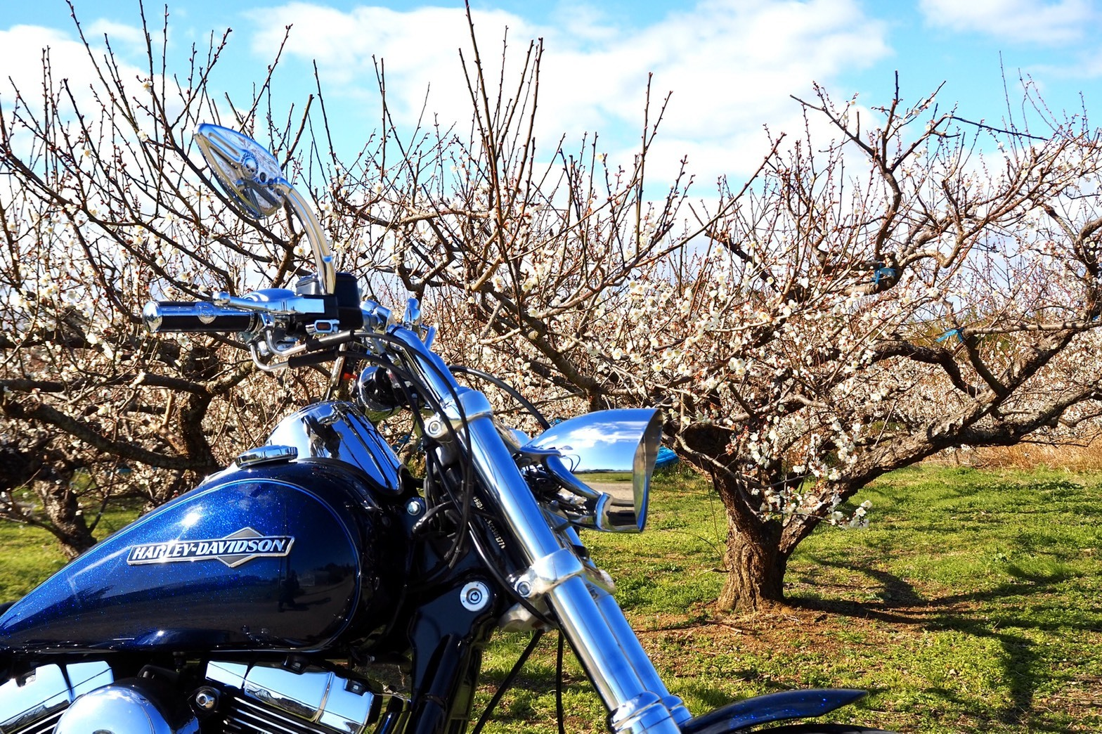 harleydavidson-motorcycle-touring-blog-wakayama-plum-tree-2.jpg