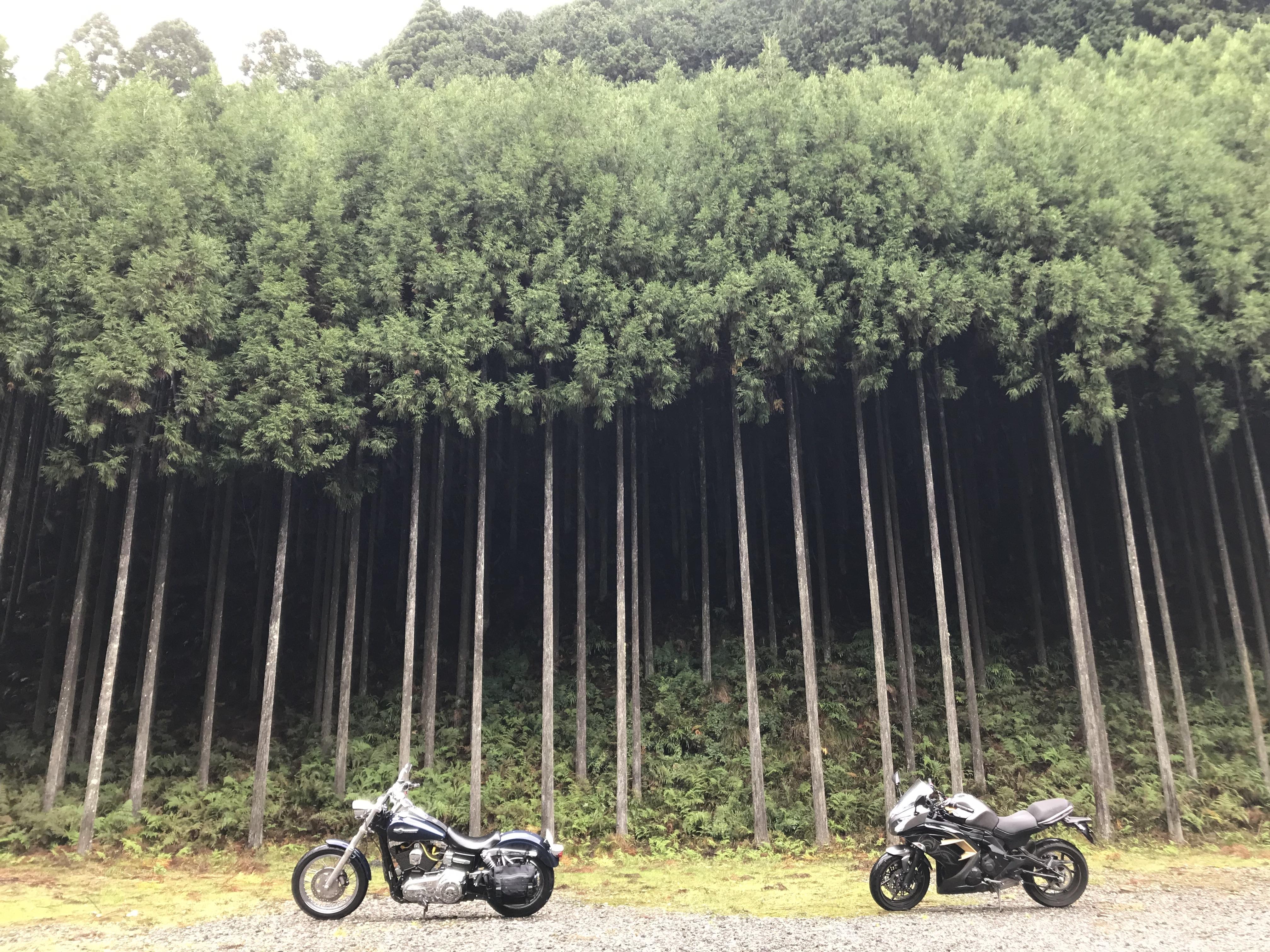 京都ダム巡り ツーリング 北山の里 杉林