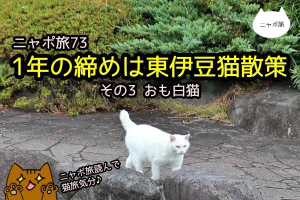 伊豆 白猫