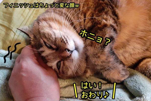 甘えん坊 猫