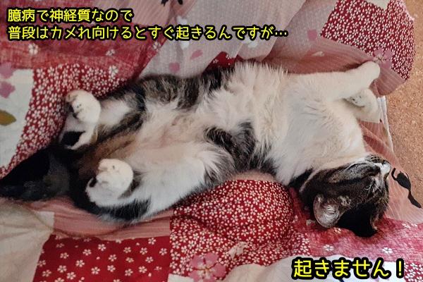 リラックス猫