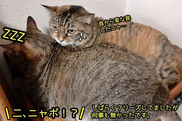 猫 フリーズ